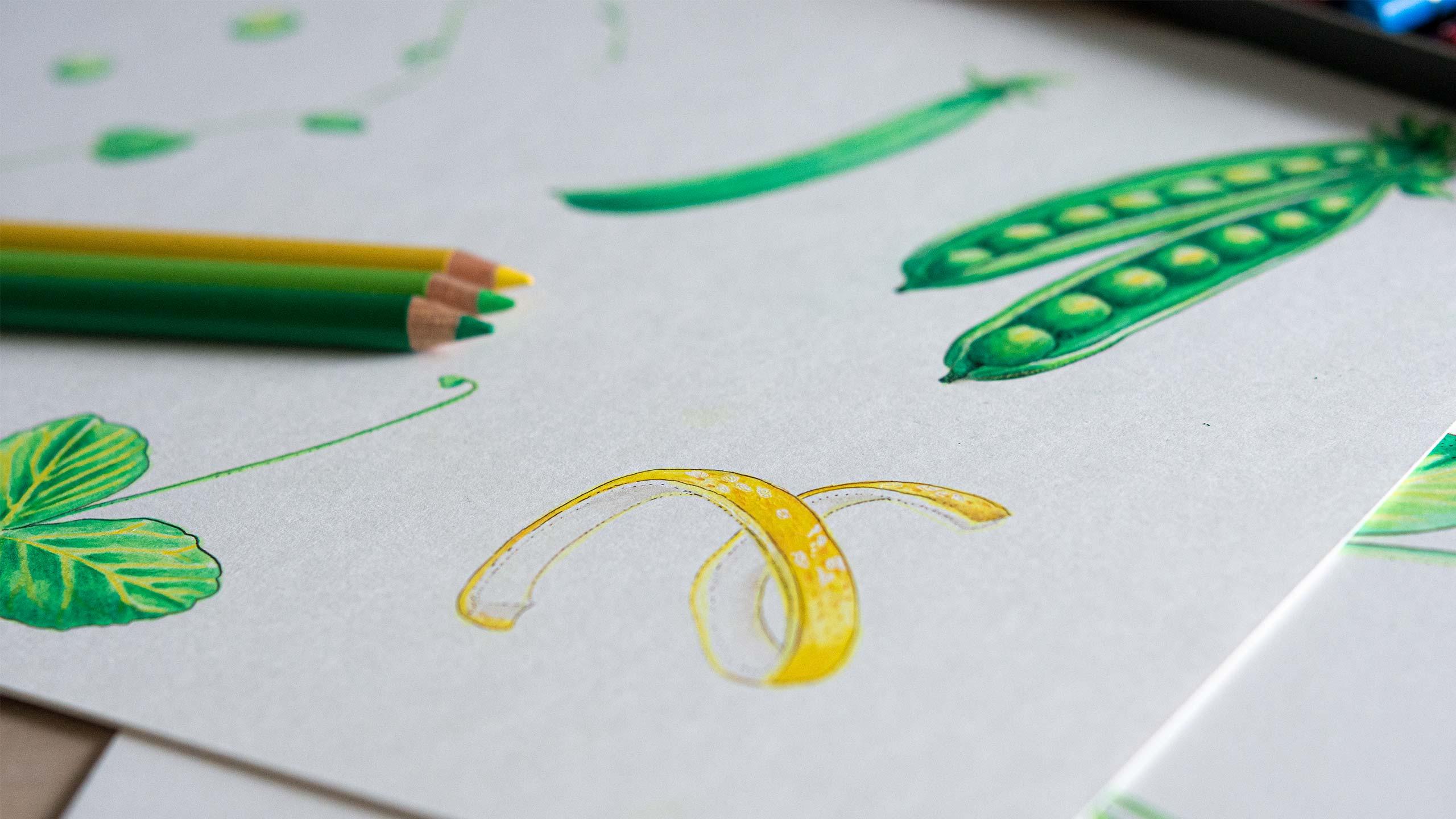 Photo of illustration drawing.
